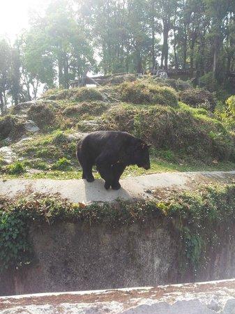 Padmaja Naidu Himalayan Zoological Park:                   Zoo