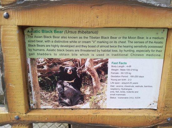Padmaja Naidu Himalayan Zoological Park 사진