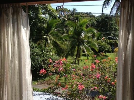 Jacaranda Hotel and Jungle Garden:                   View from bedroom window