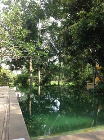 Komaneka at Monkey Forest:                   Beautiful infinity pool set in the forest.