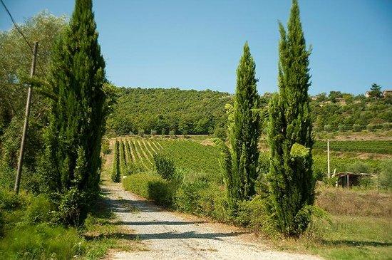 Cantina Berioli: La strada di campagna che attraversa le Vigne e conduce alla Cantina