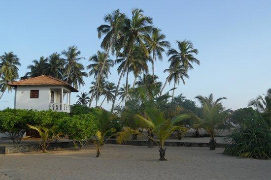 Tropical Garden:                   Houses are set in a beautiful garden