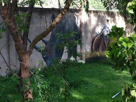 Sakina campsite:                   Garten