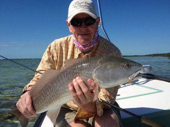 Sight Fish Charters:                   a catch and release redfish