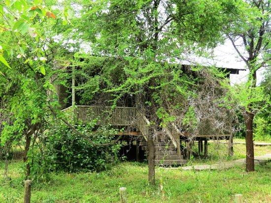 Kwalape Safari Lodge :                   Green surroundings