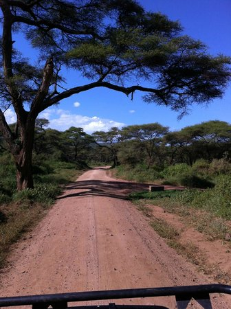 Full-Day Lake Manyara National Park Tour:                   Nationalpark