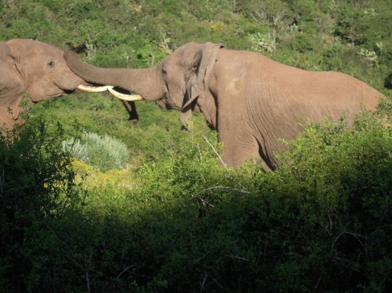 Gorah Elephant Camp:                   Elephant fight