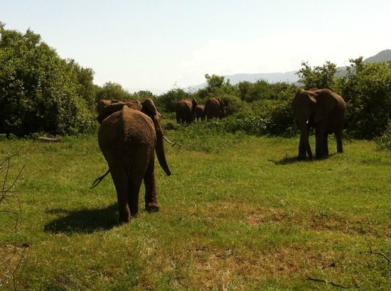 Full-Day Lake Manyara National Park Tour:                   Elefantenherde