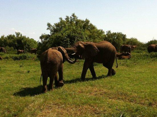 Full-Day Lake Manyara National Park Tour:                   Elefantenherde