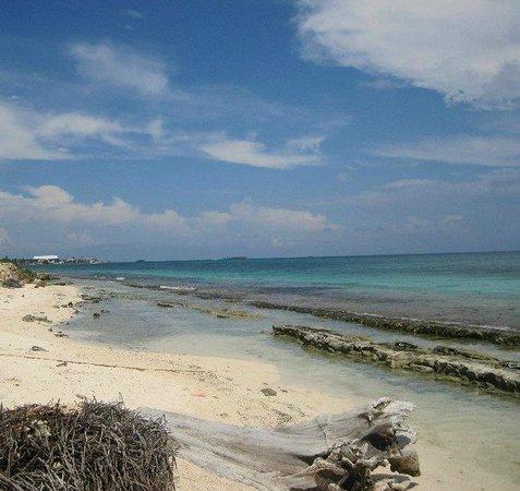 Decameron San Luis:                   playa del hotel