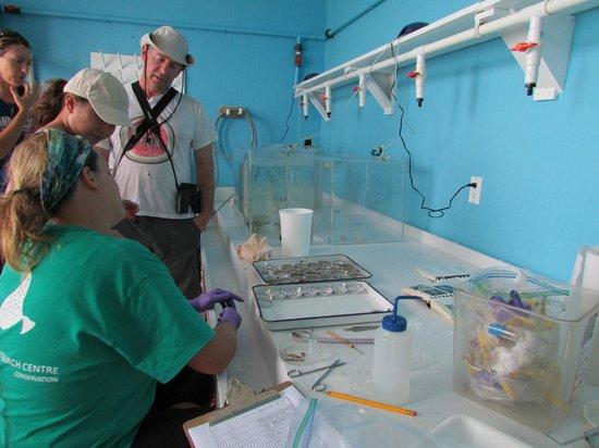 Jackson Point:                   Central Caribbean Marine Institute wet lab tour. Lion fish study.