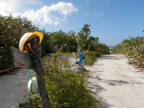 "Jackson Point:                   Funky sea trash ""sculpture"" fence on the walk to Jackson beach."