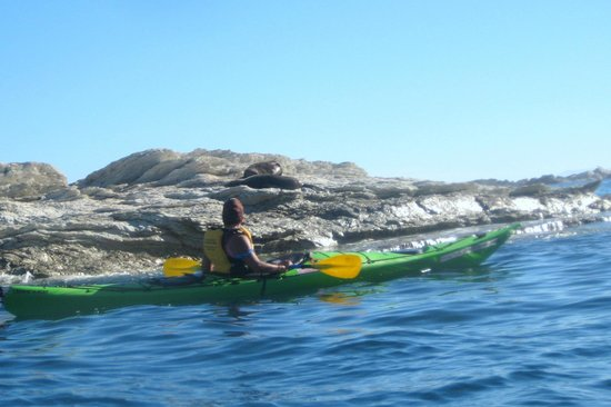 Kaikoura Kayaks:                   Our guide Tyler