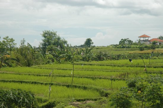 Oazia Spa Villas:                   View from the balcony, overlooking the rice paddies behind the villa