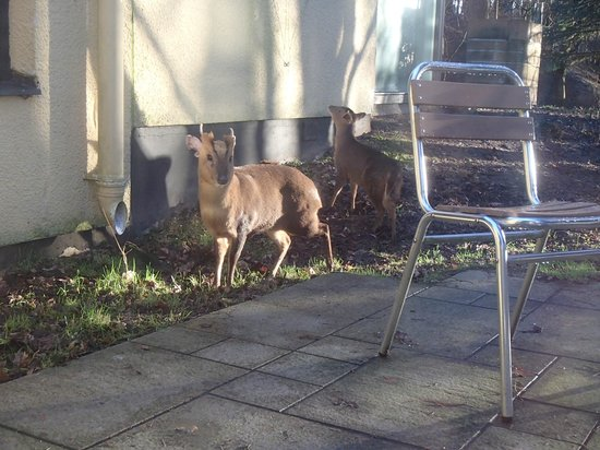 Elveden, UK:                   Wildlife on the patio
