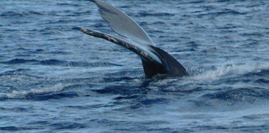 Waianae, HI:                   Whale tail