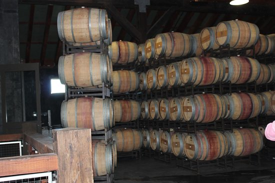 Frog's Leap Winery: barrels in the cellar area