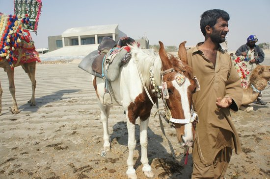 Hawks Bay:                   Horse Riding