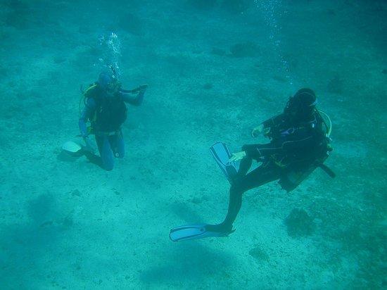 Calypso Diving Centre:                   abtauchen /