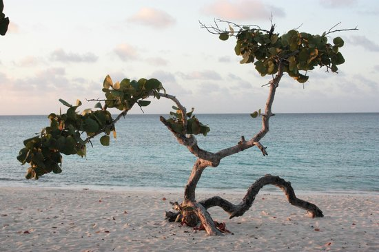 Hotel Playa Pesquero:                   The amazing trees on the beach