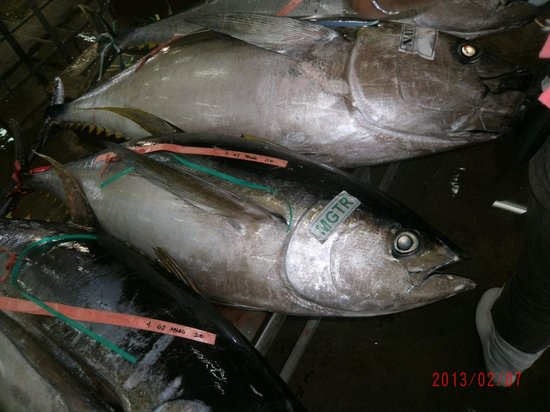 general santos city fishing industry from General santos city industrial tour  rd fishing industry inc rd tuna ventures, inc south pacific allied fisheries corp south pacific deep sea ventures corp.
