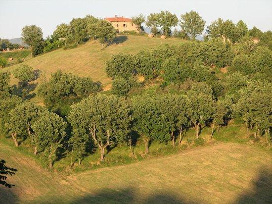 Borgo Corsignano:                   Our backyard
