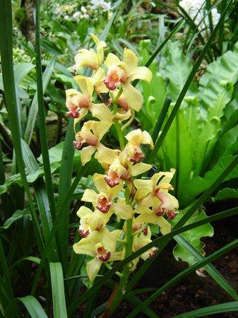 Royal Botanic Gardens, Kew:                   area tropicale...