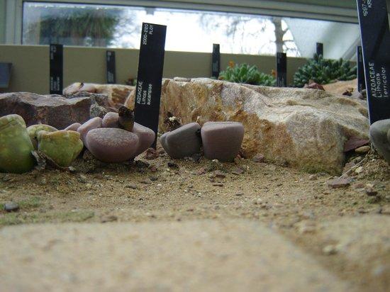 Royal Botanic Gardens, Kew:                   le pietre viventi