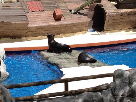 Мадридский Зооаквариум: Seals