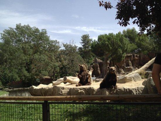 写真Zoo Aquarium de Madrid枚