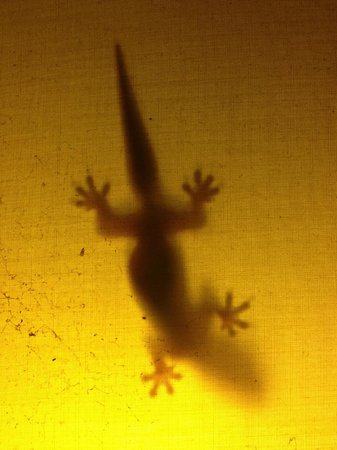 Anda Amed Resort:                   Gecko in the lights