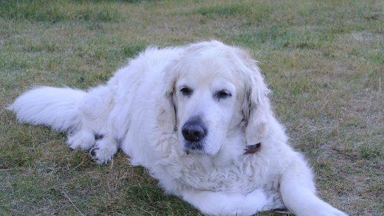 ノーザン ライト イン,                   ここのINNのアイドル犬!!彼はオーロラに結構敏感に反応するらしい・・・・