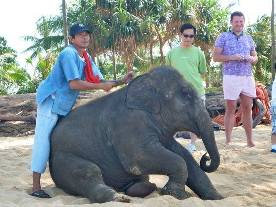 Marriott's Phuket Beach Club: Resident Baby elephant