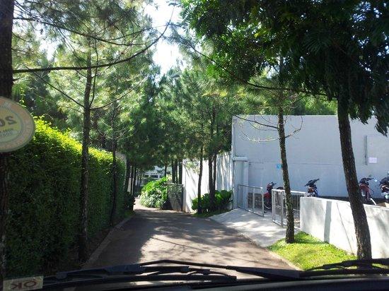 Bumi Bandhawa Hotel: garden