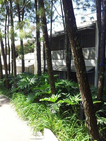 Bumi Bandhawa Hotel: room