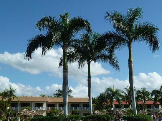 Grand Bahia Principe La Romana:                   palms