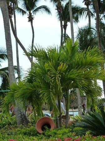 Grand Bahia Principe La Romana:                   green palms