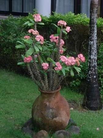 Grand Bahia Principe La Romana:                   more flowers