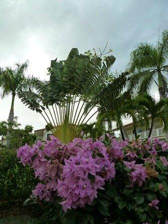 Grand Bahia Principe La Romana:                   flowers again