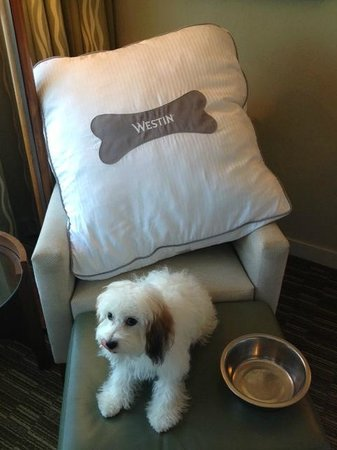 ‪ويستن تامبا باي:                   Westin Heavenly Pet Bed!! Nice Touch!