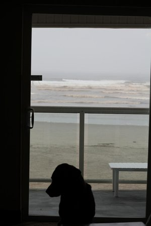 Shilo Inn Suites Hotel - Seaside Oceanfront:                   Even in winter, so beautiful :)