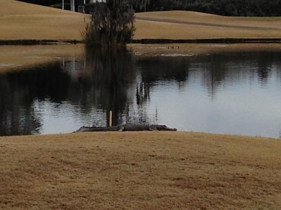 Heritage Club:                   Gator on 18