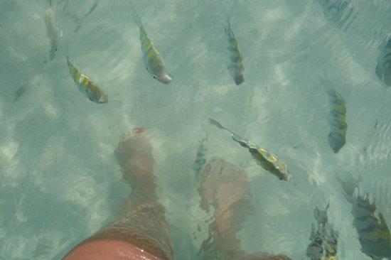 El Dorado Sensimar Riviera Maya:                   Plenty of curious fish.