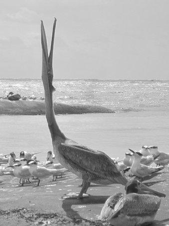 El Dorado Sensimar Riviera Maya:                   Crazy Pelican