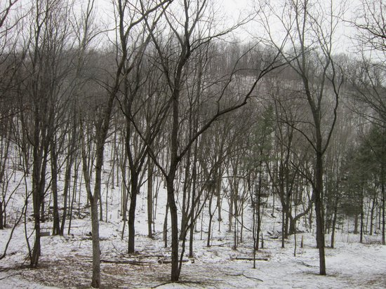 Candlewood Cabins:                   Your view of Tranquility