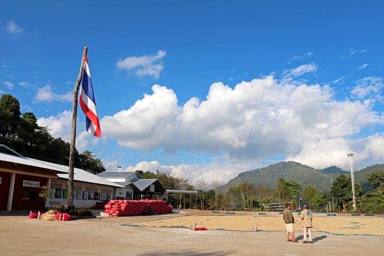 Mae Suai, Thaïlande: Doi Chaang Coffee Patio