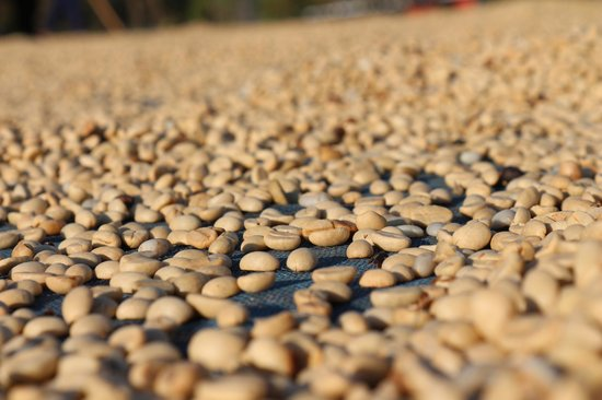 Mae Suai, Tailandia: Parchment Coffee Beans On Patio