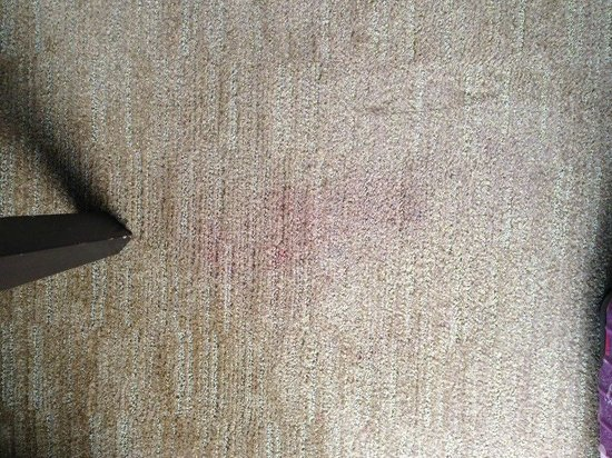 The Westin Beach Resort, Fort Lauderdale:                   Carpet Stains