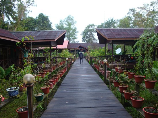 Abai Jungle Lodge: the boardwalk