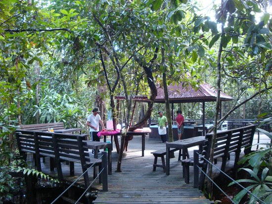 Abai Jungle Lodge: jungle platform where we had our breakfast